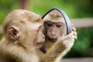 dbać o lustro